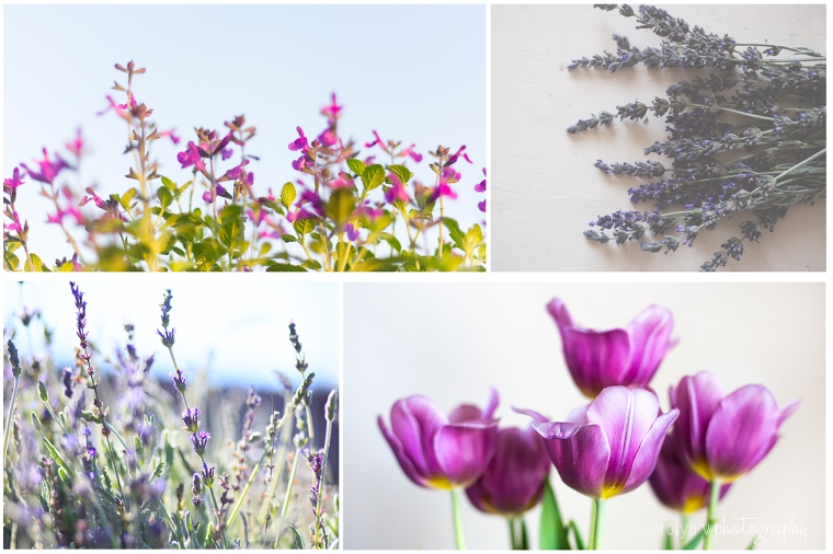 purple-flowers-sm