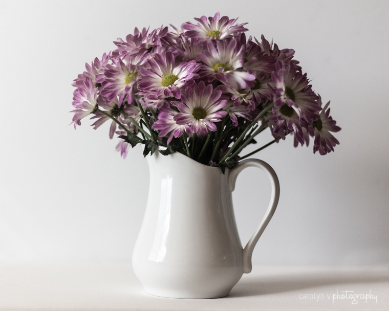 Daisies in a Pitcher logo.jpg
