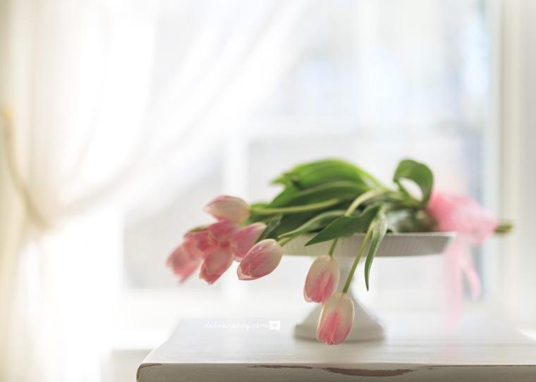 04-07-17 Pink Tulips-6-HDR_Logo